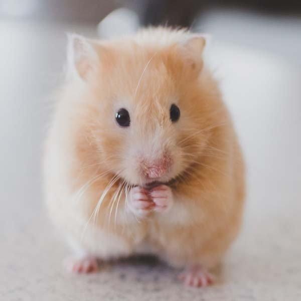 RAT Photo