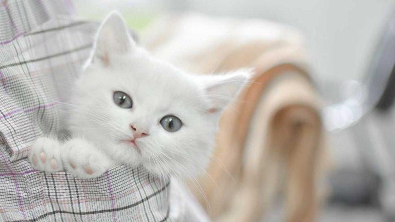 Charming Kitten APT35